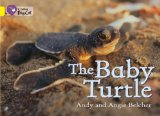 Book Cover The Baby Turtle (Collins Big Cat)