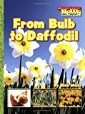 Book Cover From Bulb to Daffodil (Scholastic News Nonfiction Readers)