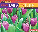 Book Cover From Bulb to Tulip (Start to Finish)