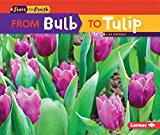 Book Cover From Bulb to Tulip (Start to Finish, Second Series)