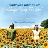 Book Cover Sunflower Adventure: Always Facing the Sun!: A Photo Journey through 350,000 Sunflowers